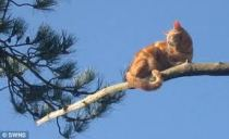 cat stuck in tree