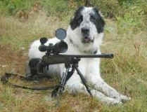 dog with rifle
