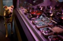 dog restaurant