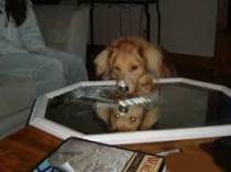 dog taking cocaine